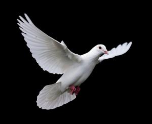Bird iStock_000002531168Large